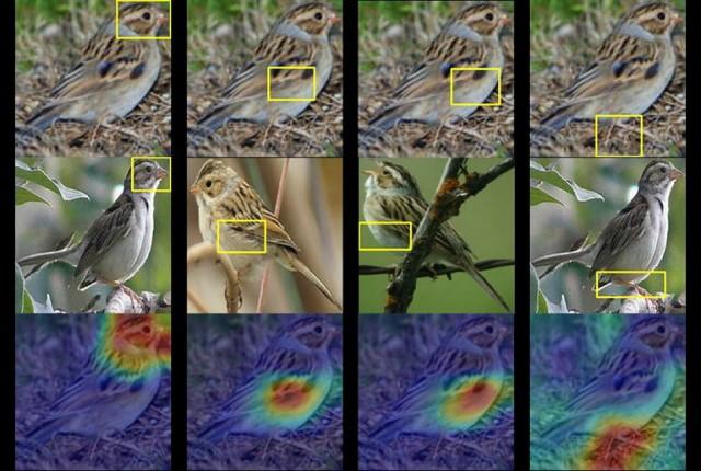 هوش مصنوعی میتواند یک پرنده را با دیدن تنها یک عکس از آن شناسایی کند